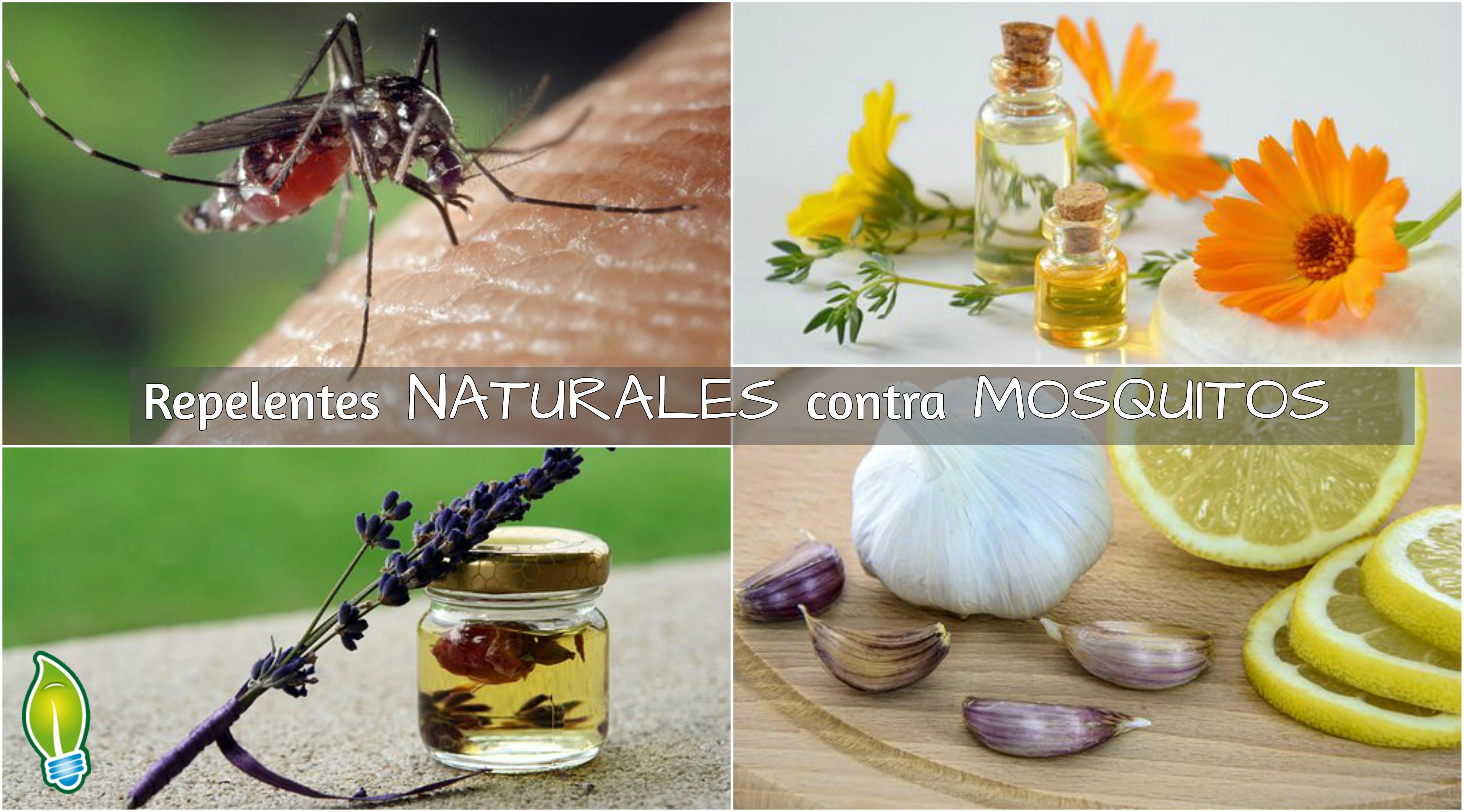 Repelentes Naturales Contra Mosquitos Sustentartv